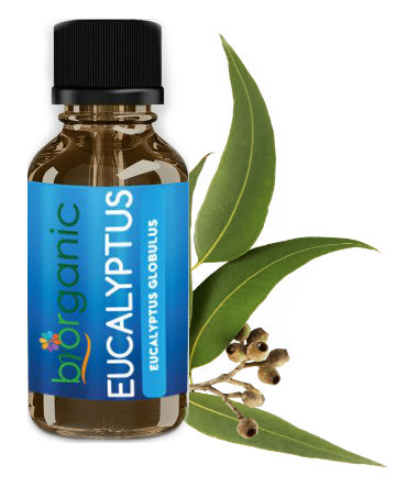 https://www.organicbrands.gr/el/product/1784/biorganic-eucalyptus-essential-oil?sz=22